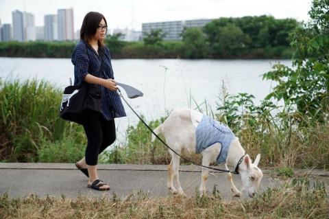 Японка 8 лет живёт со своим лучшим другом-козлом