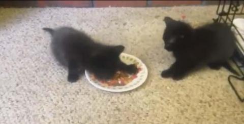 Очень жадные котята