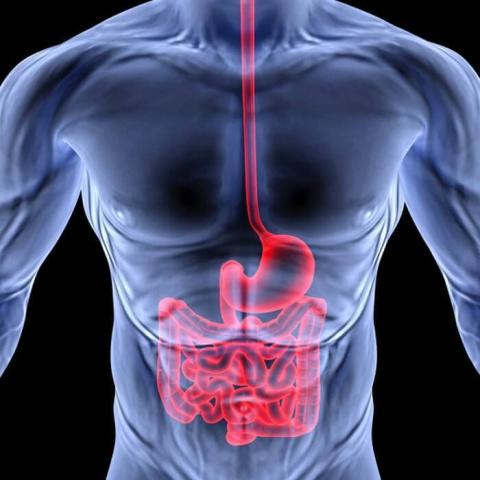 Болит горло — проверь кишечник!