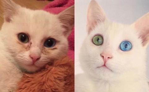 Кот доказывает, что в жизни …