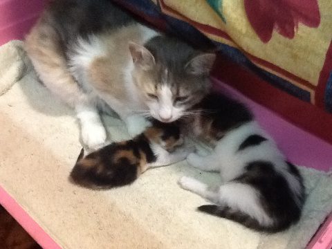 Ночное спасение котёнка.Рост…