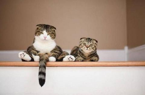 Сугубо положительные коты и собаки и некоторые другие персоны