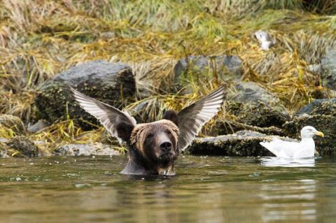 40 самых смешных фото дикой природы, сделанных в 2016 году