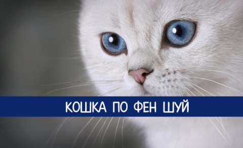 Кошка по Фен шуй