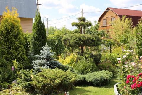 Подмосковье: сад Ольги Семеновой