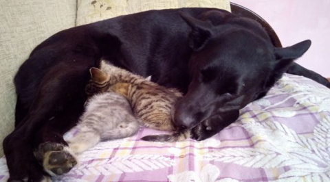 Как собака стала мамой двум котятам