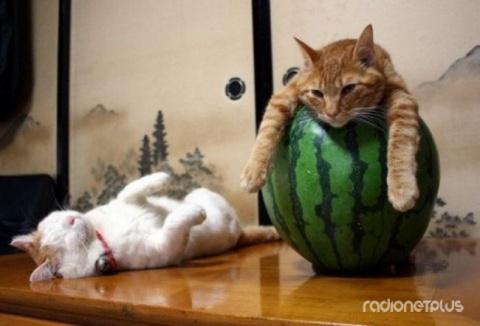 20 котиков, которые постигли…