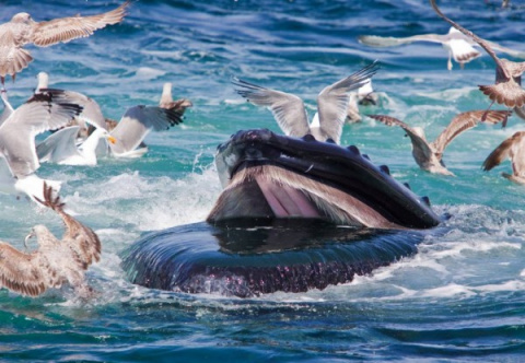 Лучшие фотографии природы: океан