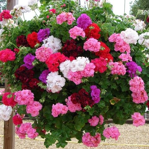 Бурное цветение и пышная листва обеспечены, если полить растения этой простой подкормкой