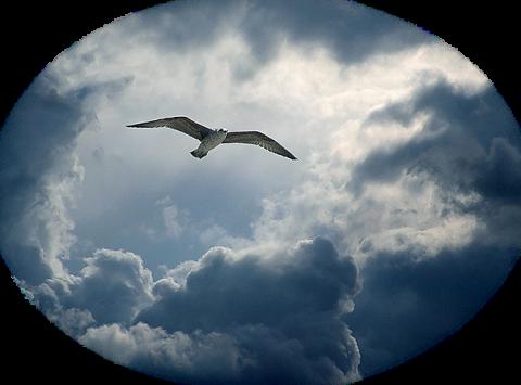 И жизни нам - мало, и неба нам - мало, Мы тысячи раз начинаем сначала..
