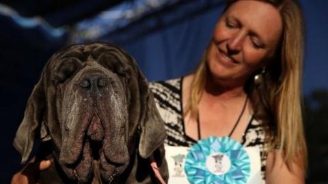 """Конкурс """"Самая некрасивая собака"""" выиграл неаполитанский мастиф"""