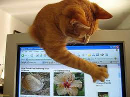"""Прикольные фото:""""Коты везде....Они следят за нами...""""Часть 3. (73фотографии)"""