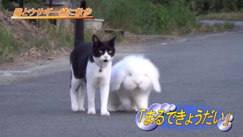 В Японии живет очень необычная и дружная семья: мама-кошка и сынок-кролик