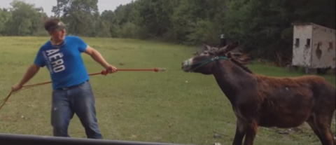 Смешные моменты из жизни животных