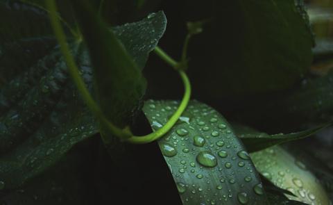 10 шокирующих фактов о растениях