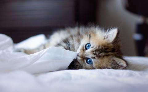 ЗА и ПРОТИВ животного в кровати