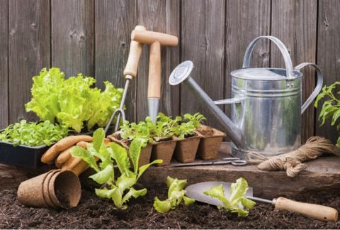 Огород без химикатов: 12 зол…