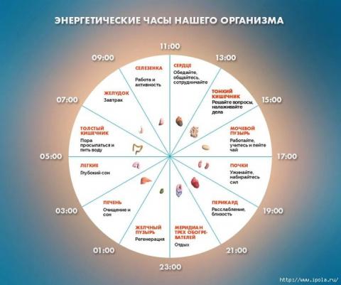 Что такое энергетические часы и как они влияют на ваше здоровье?