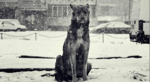 Бездомная собака спасла сбит…