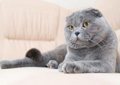 Мог ли кот продумать такой и…