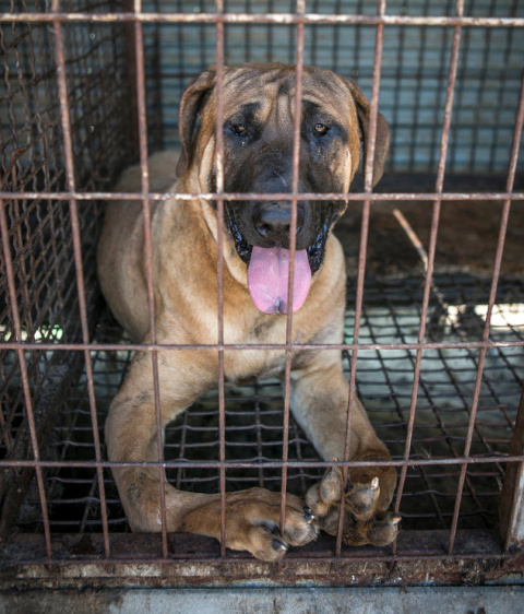 Спасение собаки с искривленными лапами с собачьей фермы