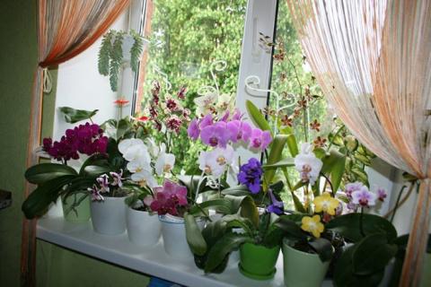 Экстренная реанимация орхиде…