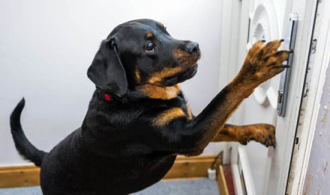Собака спасла жизнь хозяину,…