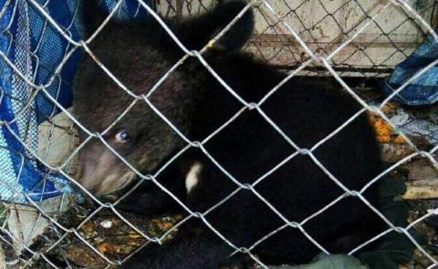 Спасенный медвежонок не може…