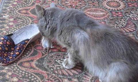 Как кот показал себя настоящ…