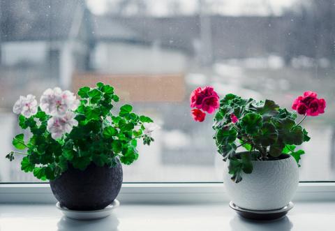 Периоды жизни комнатных растений