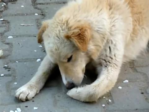 История спасения раненого бездомного пса