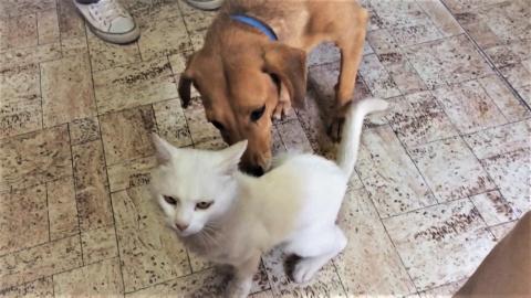 смешные собаки и кошки