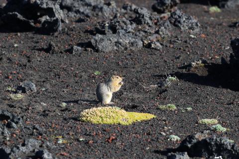 О жизни и смерти на вулканах