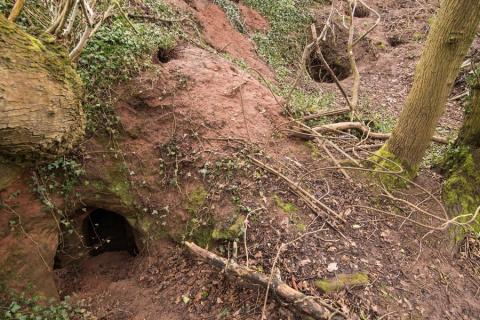 700-летнюю пещеру тамплиеров нашли в кроличьей норе