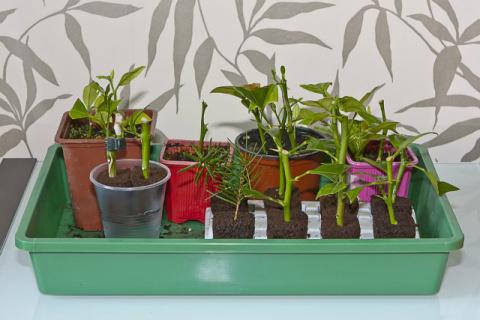 Как размножать растения простыми способами