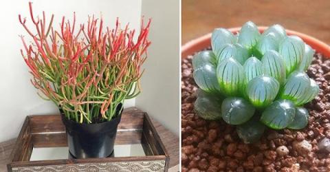 12 дивных комнатных растений…