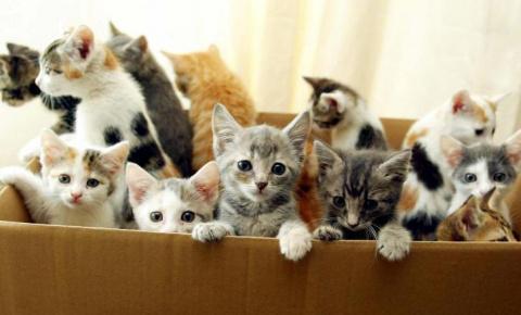 Смешная история про кота Мазая и силу отцовского инстинкта