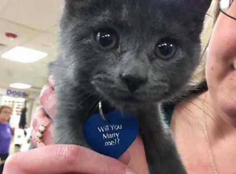 Мужчина предложил своей возлюбленной руку и сердце, использовав взятого с приюта котенка