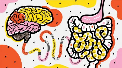 Почему кишечник – второй моз…