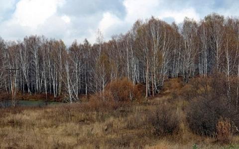 В Новосибирской области наследил Снежный человек