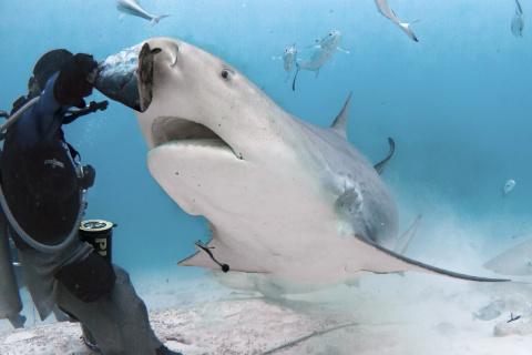 Опасная съемка акул на глубине