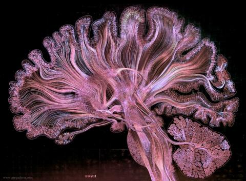 Самоотражение мозга