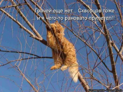 Мартовский котодром от Михалыча!