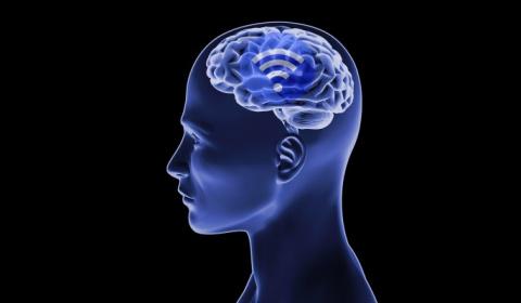 В мозге людей обнаружили Wi-Fi