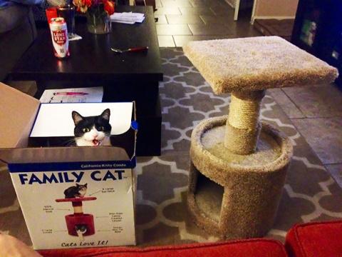 Фотографии кошек, использующ…