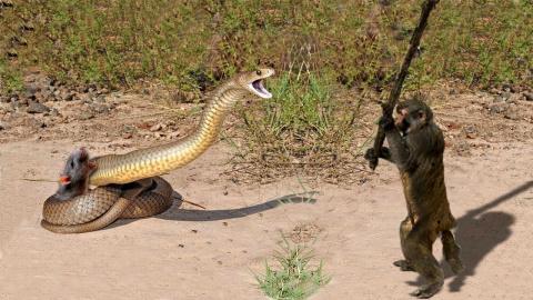 Животные спасают друг друга и эти случаи были снятые на камеру