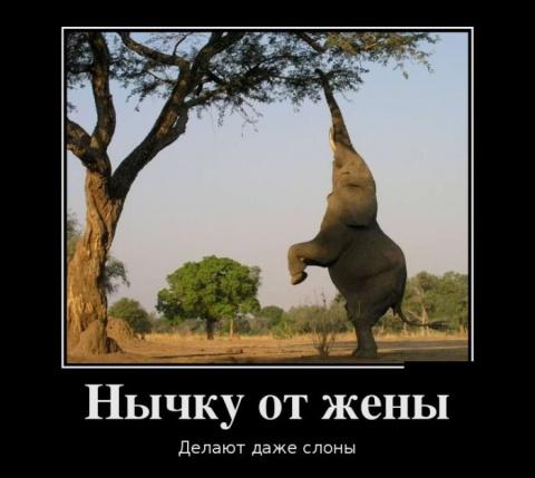 Веселые картинки и фото))