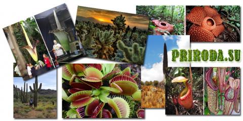 10 самых удивительных растений Земли