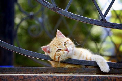 Позитивные животные и красот…