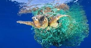 ООН объявляет войну пластико…